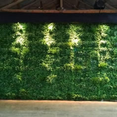 Greenwall with Lights