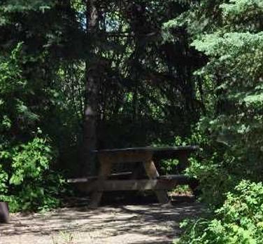 Treed Site.