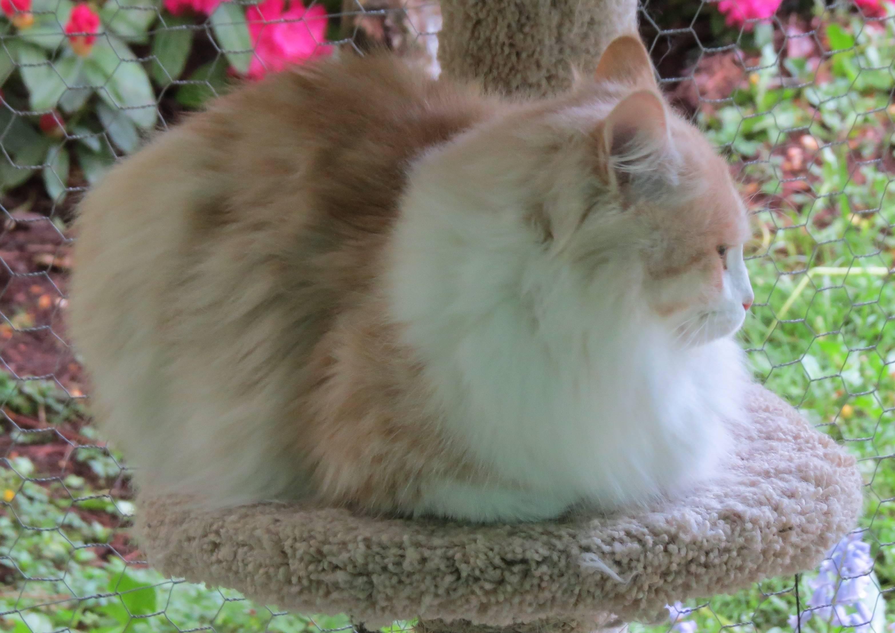 Bailey profile