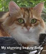 Ruby - Oct 2018.jpg