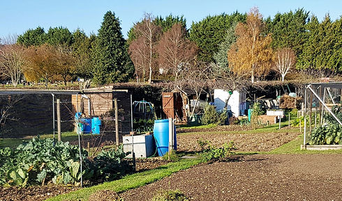 Cleared Allotments 1.jpg