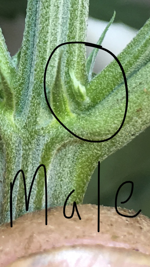 Determining Plant Sexes