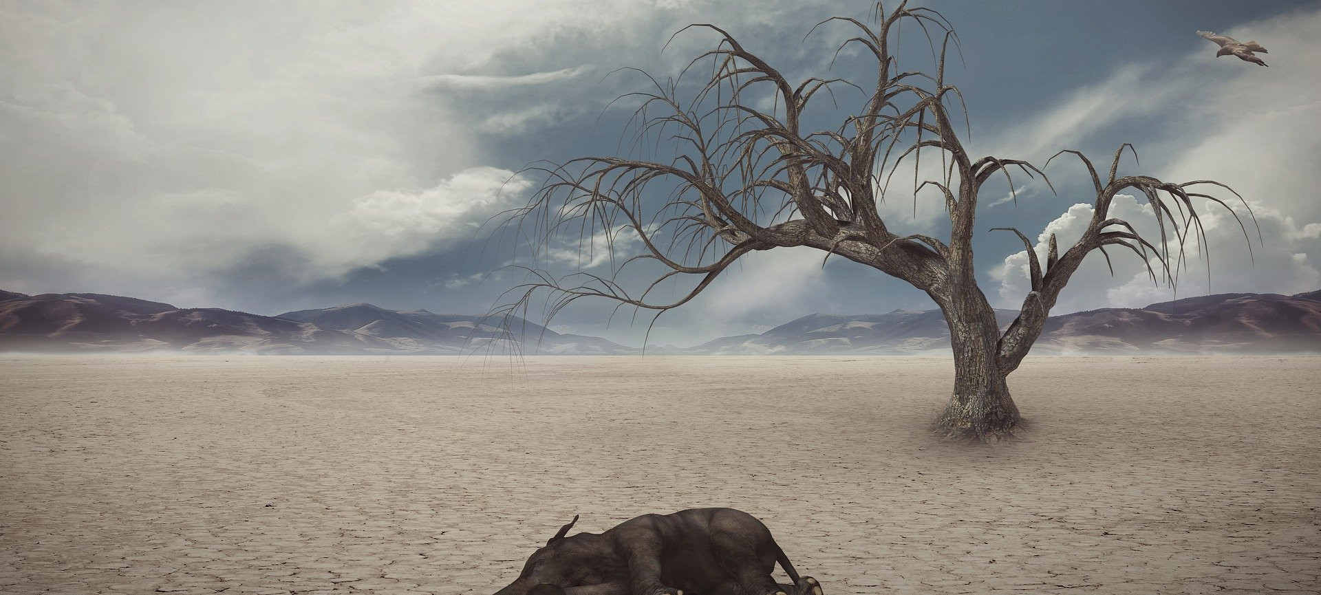 Drought(1).jpg