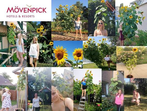 Sunflower Challenge bei Mövenpick