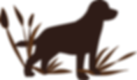 HILL MOOR Labrador Zucht