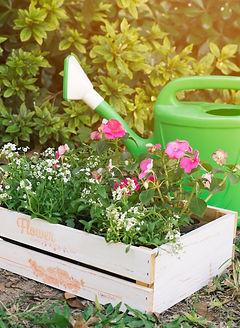 box-flowers-green-garden_edited_edited.j