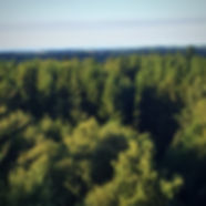 De smukke bornholmske skove