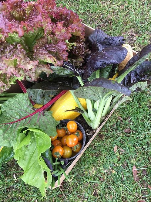 Large Fruit & Veg Box+ Sourdough