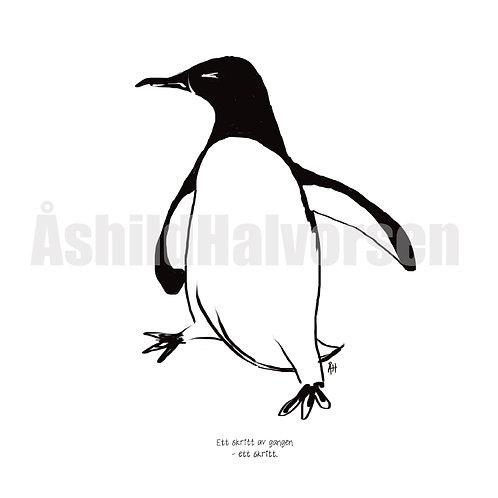 05 Pingu