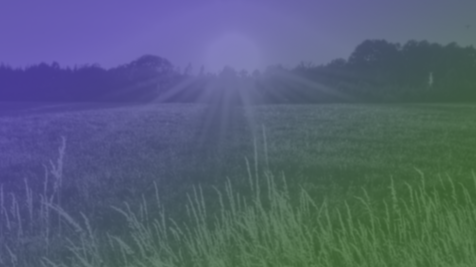 wheat field banner.png