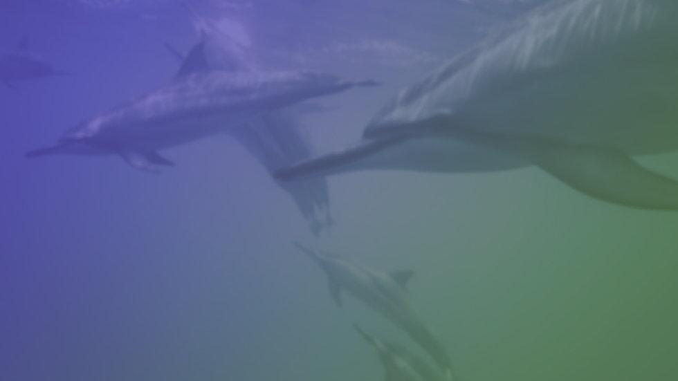 dolphin bg.jpg