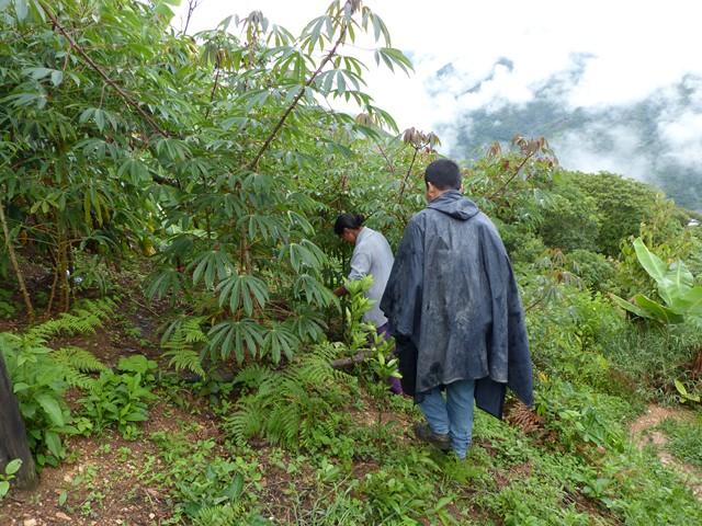 Coeur de Forêt Bolivie