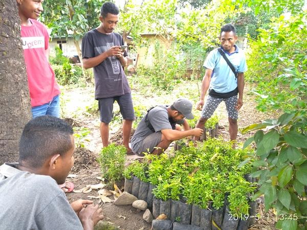 Distribution de plants de Santal