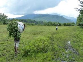 Volontariat Indonésie : Développement agricole