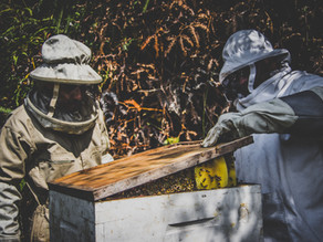 Volontariat Bolivie : Appui activités agricoles et apicoles