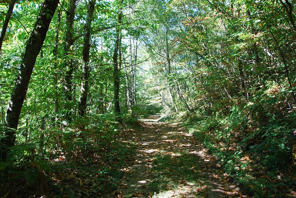 Coeur de Forêt lance son nouveau projet de préservation et valorisation des petites forêts françaises