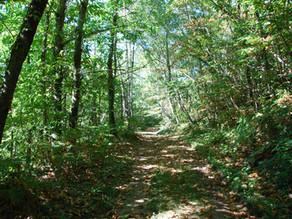 Propriétaires de petits bois et amoureux des forêts : C'est le moment de penser plantations.