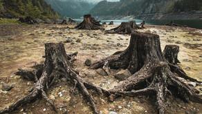 [Article] Chaque minute plus de 2000 grands arbres sont abattus dans le monde - Topcom