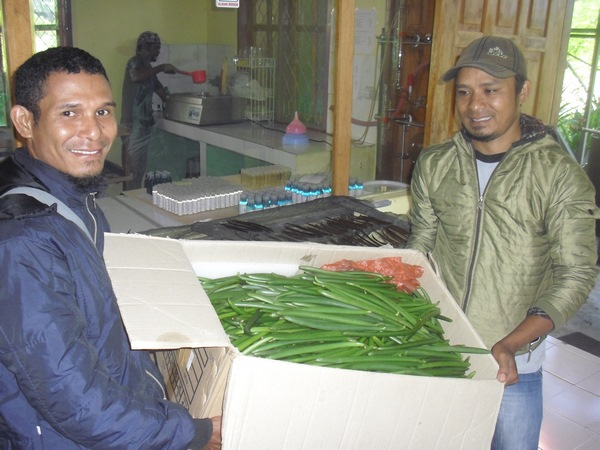 Responsables du suivi producteurs avec récolte de Vanille (Vanilla planifolia)
