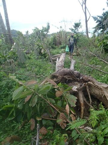 Coeur de Forêt Madagascar Masoala