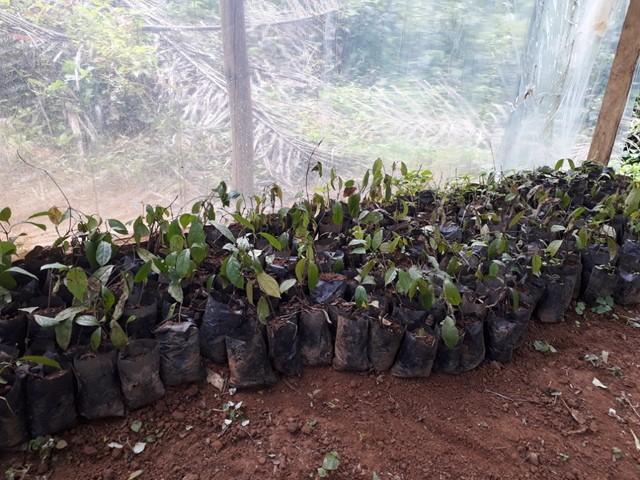 Coeur de Forêt Cameroun