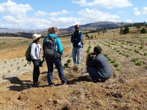 [Rapport 2017] Année tout en expérimentation à Madagascar Antsirabe