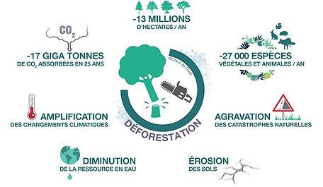 enjeux-deforestation.jpg