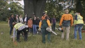 [Article] Déforestation aux Buttes Chaumont ... - ADN