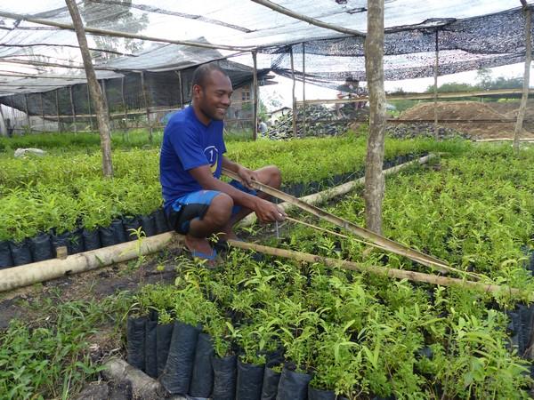 Travaux sur la pépinière de Puge Figo