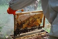 Parrainez une ruche sur le projet Coeur de Forêt Bolivie