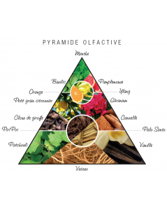 Pyramide olfactive Agua Nativa