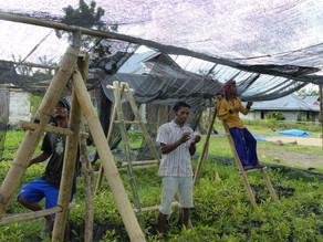 [Rapport 2017] Record de plantation en Indonésie