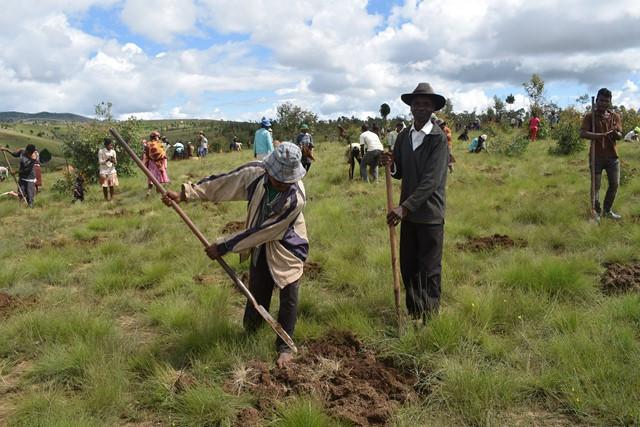 Opération de reboisement avec Coeur de Forêt Madagascar à Antsirabe