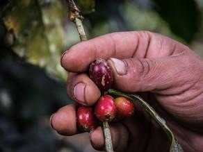 [Mission pourvue] Appui au développement agricole - projet Coeur de Forêt Bolivie