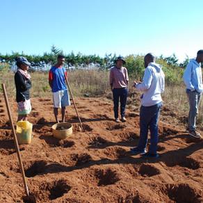 [Fermé] Volontariat Madagascar - Appui à la recherche agronomique et aux processus de distillation