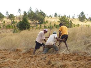 Volontariat Madagascar - Antsirabe : Diagnostic agraire