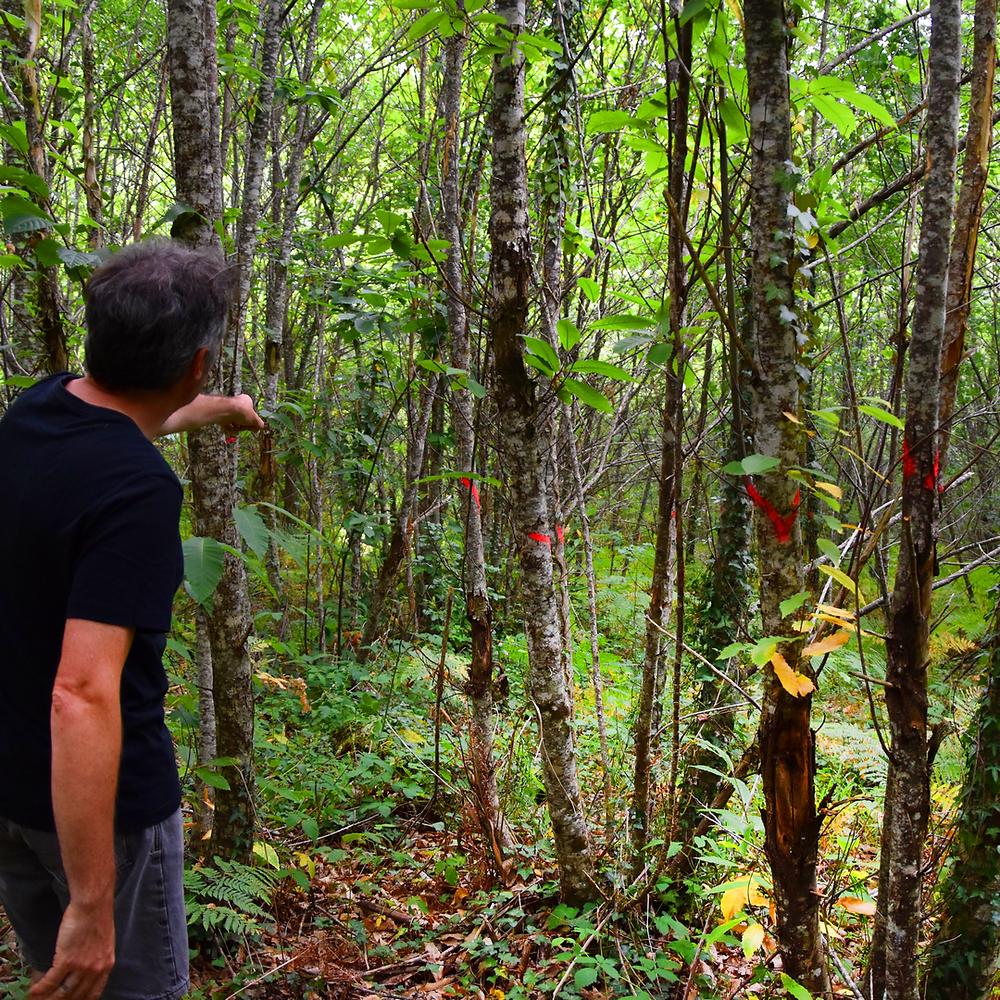 Homme dans forêt à l'occasion d'une visite de diagnostic forestier