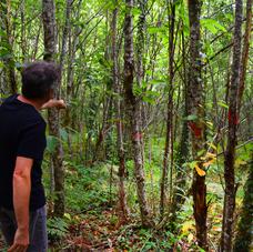 """Propriétaire de petits bois ? Votre """"Portrait de propriété"""" par un conseiller forestier qualifié !"""