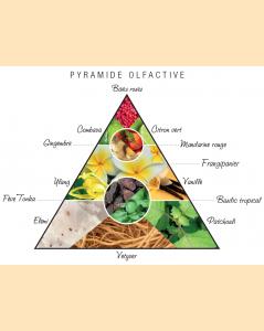 Pyramide olfactive Tsingy