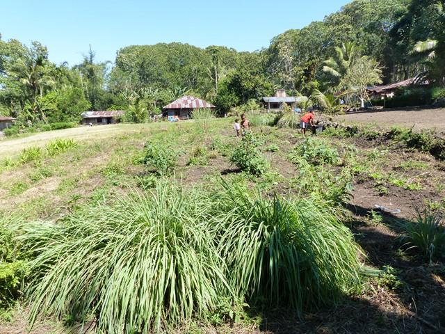 Petit jardin communautaire pilote a Maladhawi (patchouli, lemongrass et legumes) (Web)
