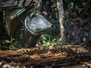 [Rapport 2017] L'apiculture a toujours la côte en Bolivie
