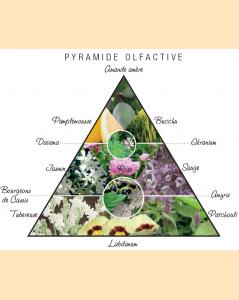 Pyramide olfactive Izwe