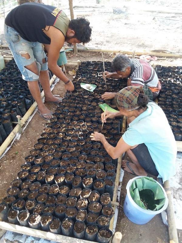 Transplantation des graines germées en pépinière (1)