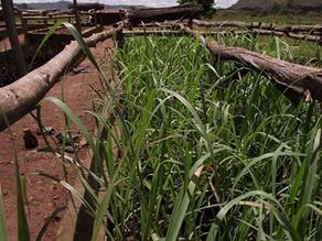 [Mission pourvue] Appui à la recherche agronomique et distillation - Coeur de Forêt Madagascar