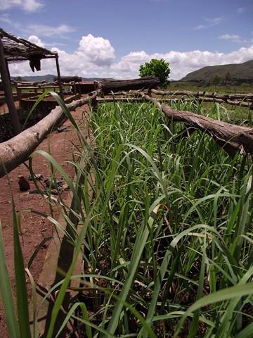 Mission appui développement agricole Coeur de Forêt Bolivie