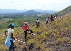 [Podcast] Orient Extrême : Sauver les forêts des îles.