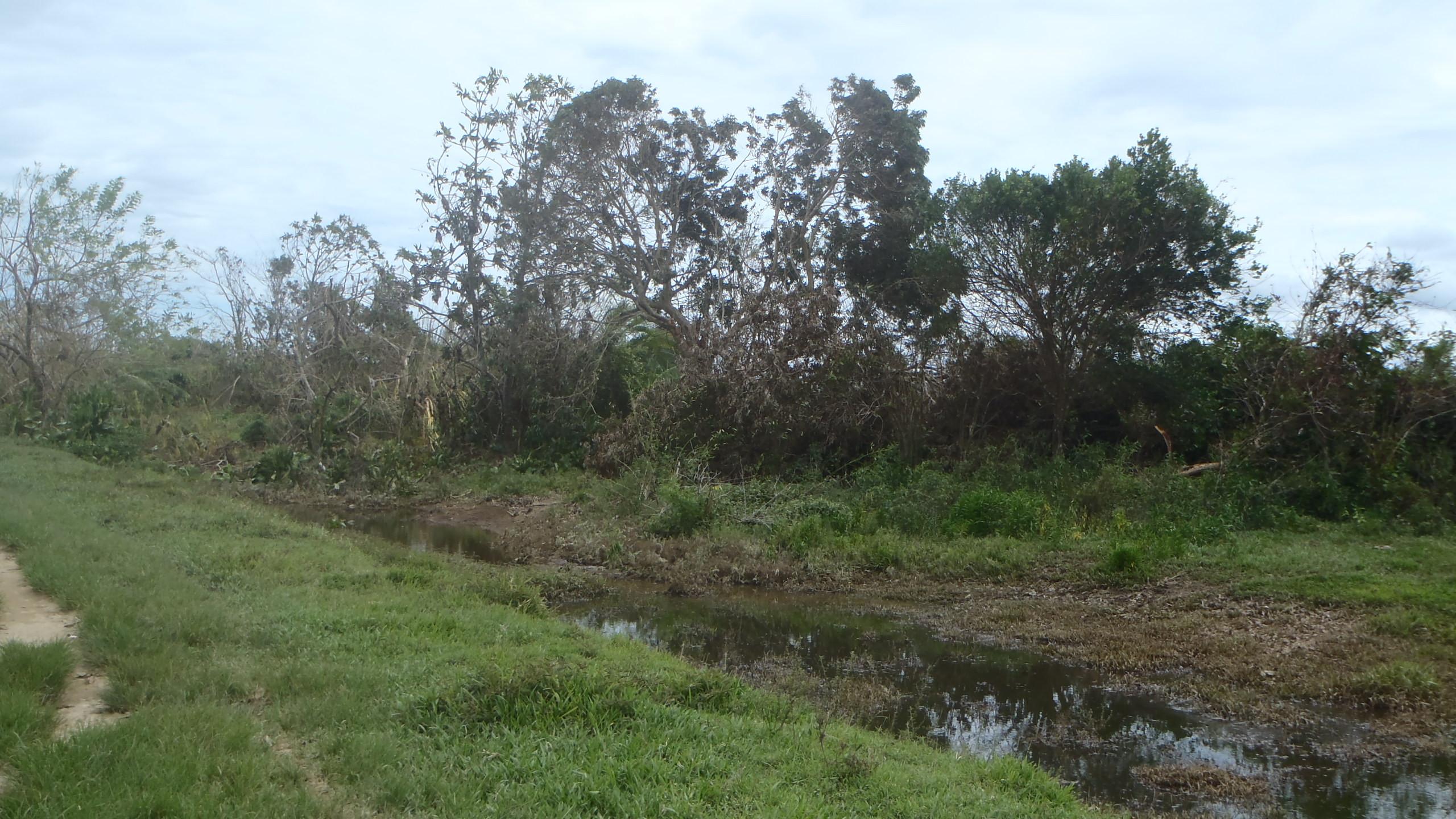 Paysages endommagés après cyclone