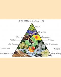 Pyramide olfactive Kashi