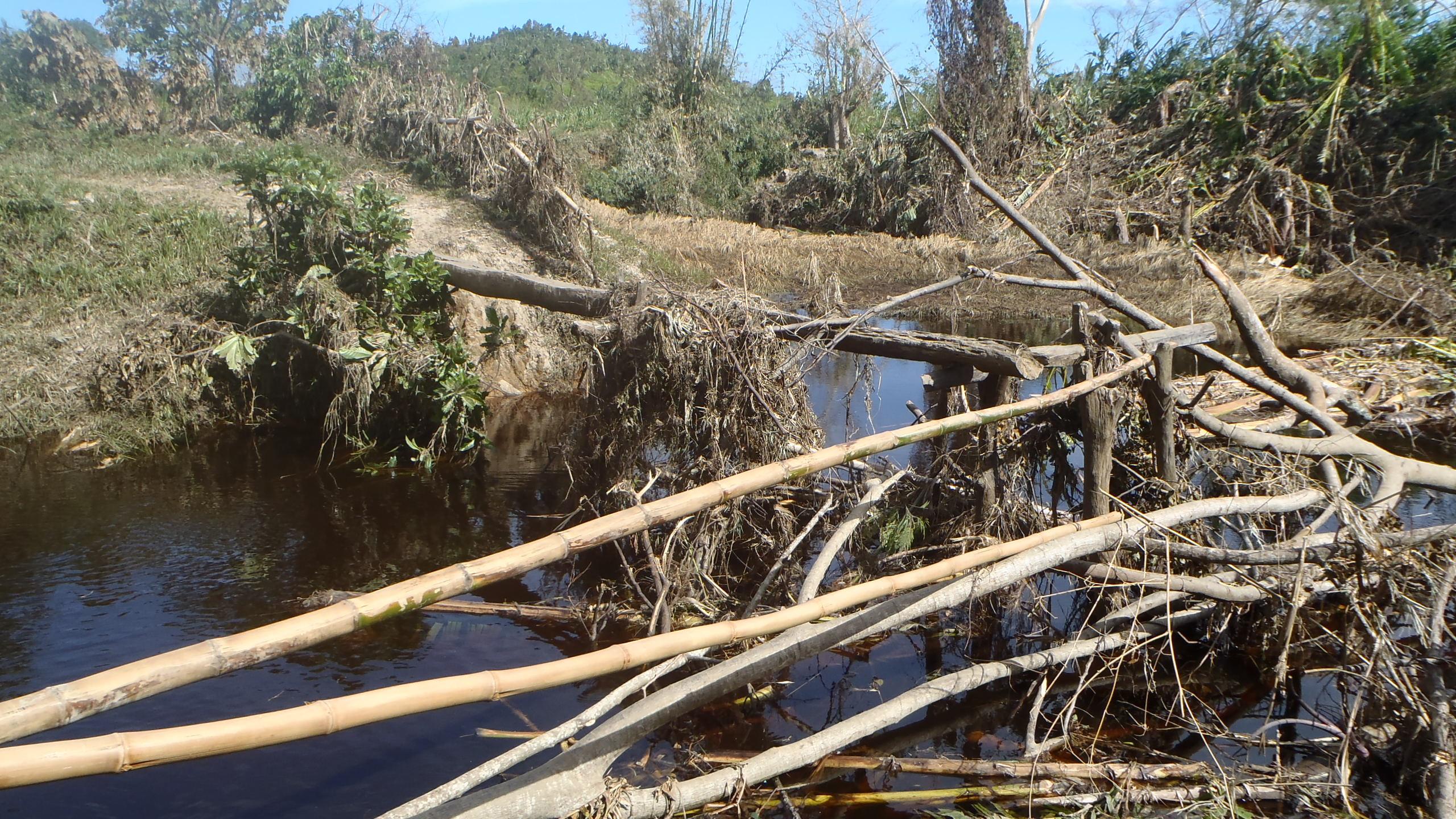 Végétation endommagée après cyclone