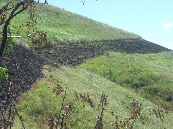 Allée pare-feu défrichée sur la colline de Nangge Mba'a